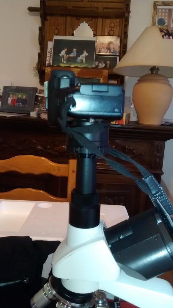 Microphoto avec mon Lumix Post-210