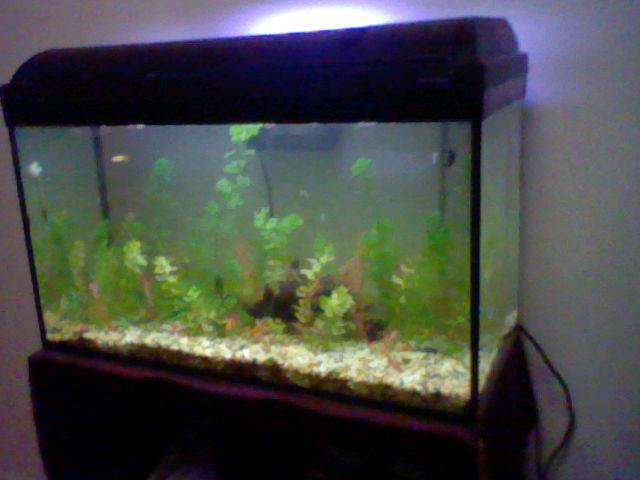 Mon aquarium 120l 64930_10