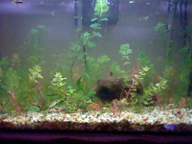 Mon aquarium 120l 73355_10