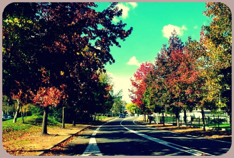 L'année 2012 en photos ! 6_nove10