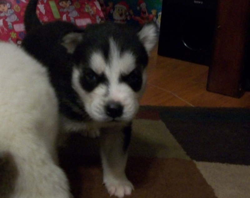 Updated pictures of Vader from Breeder! Photo_12