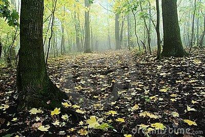 Floresta de Gastwood 12717010
