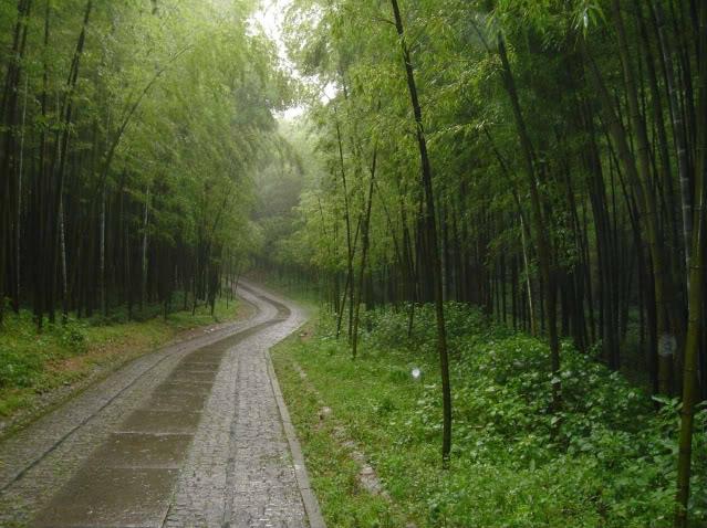 Rota do norte-sul de Andros - Página 2 Forest11
