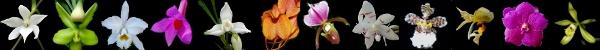photos Orchidées en fleurs