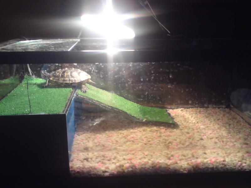 tortue qui ne se nourrie plus avec les yeux fermer  Dsc01013