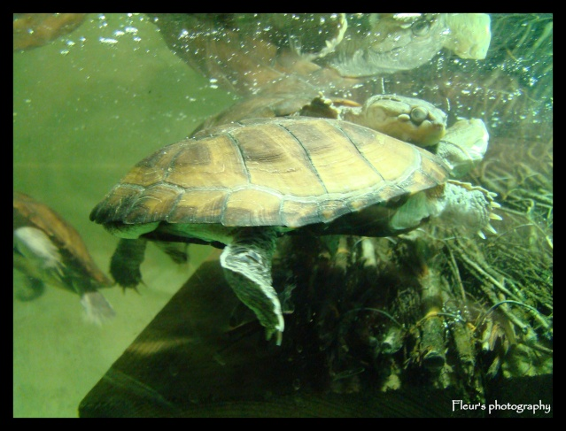 CLICHES D'ANIMAUX DIVERS Tortue10