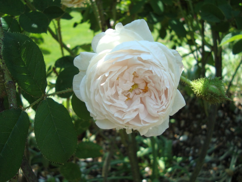 """Blanche Moreau"" - Moreau-Robert 1880 Dsc01113"