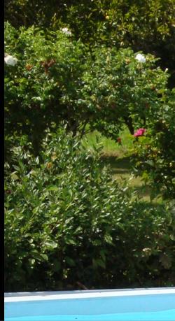 Rugosa Alba (botanique) Image_10