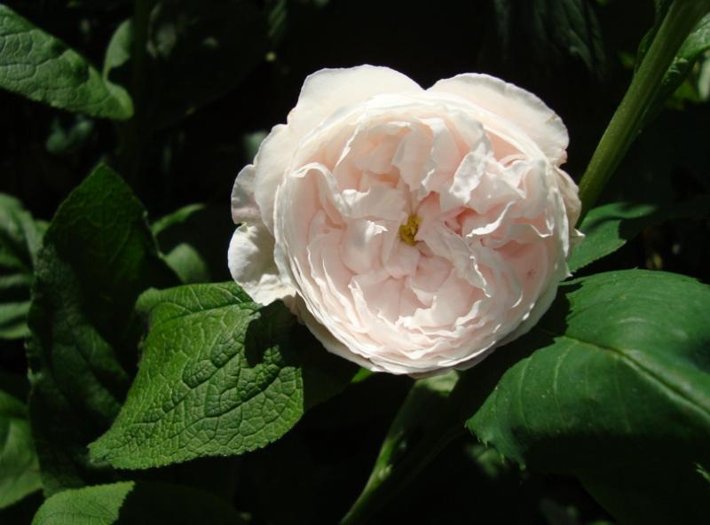 """""""Mme Alfred de Rougemont"""" - Lacharme 1862 Mme_al12"""