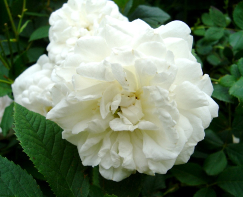Mme Plantier (Plantier - 1835) Mme_pl10