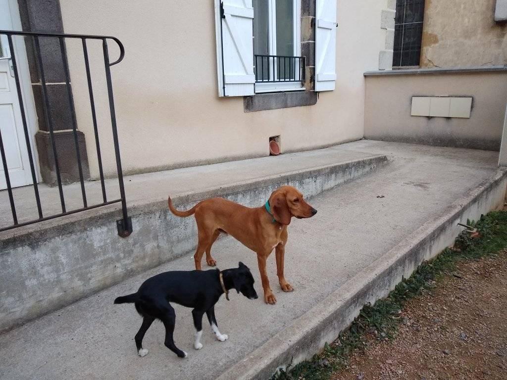 SCAMP (mâle criosé chien courant) 12874011