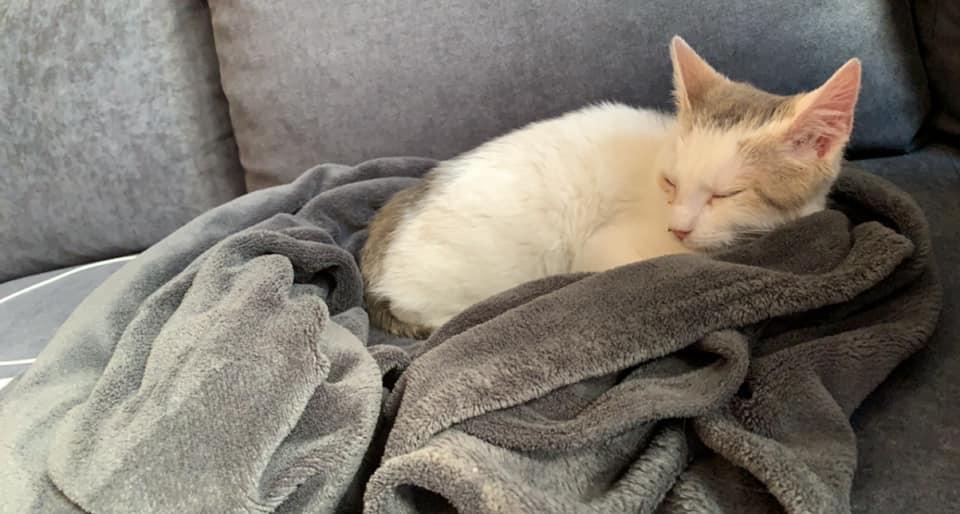 Armany  (chaton grise blanc) 14112311