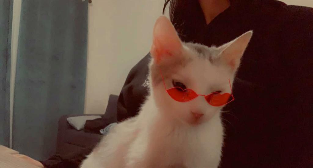 Armany  (chaton grise blanc) 14682611