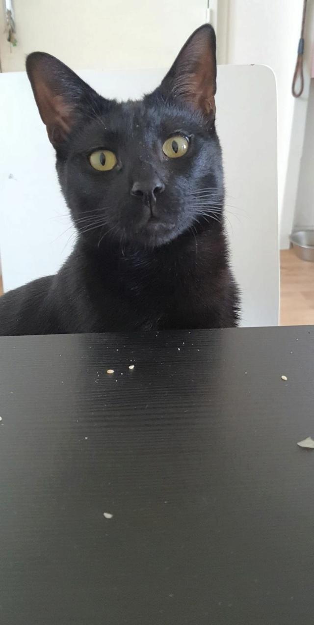 IMAM (chaton noir) 15950111