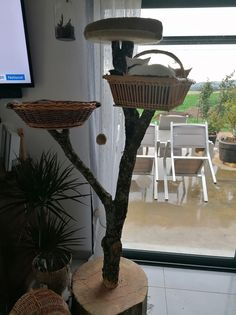 Crokmou (chaton mâle roux clair) 21793810