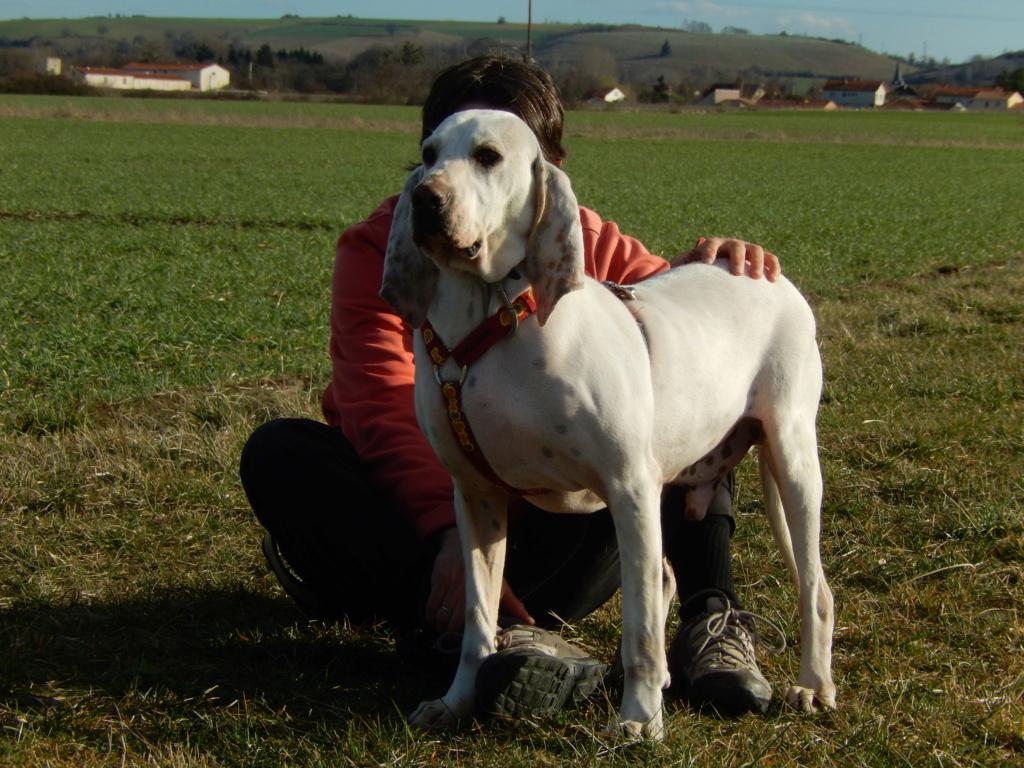 DOUDOU (chien mâle croisé courant) Réservé  4dscn916