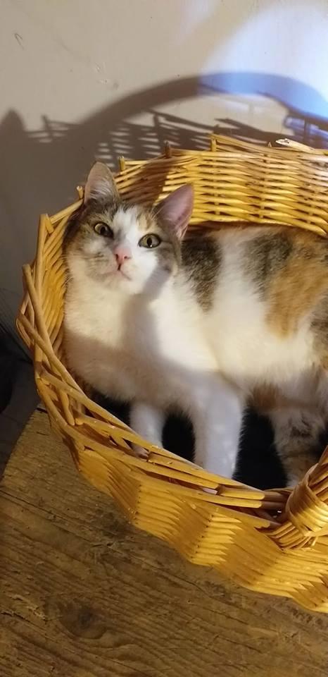 Sally (chaton tricolore) 52561410