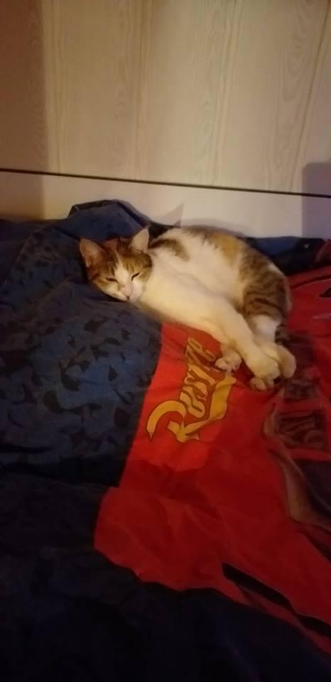Sally (chaton tricolore) 53257510