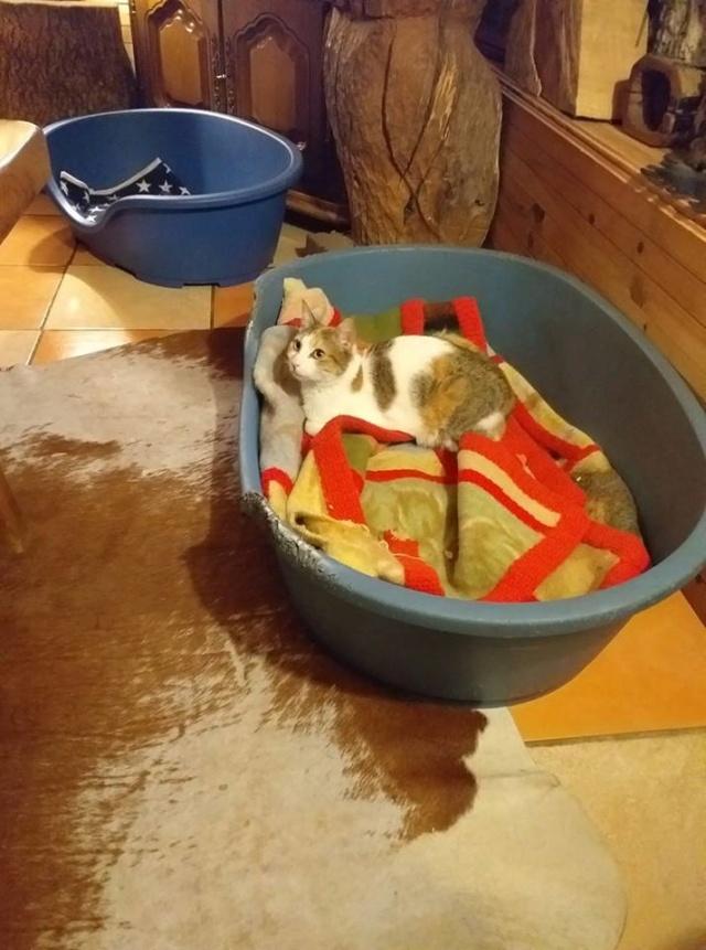 Sally (chaton tricolore) 58382810