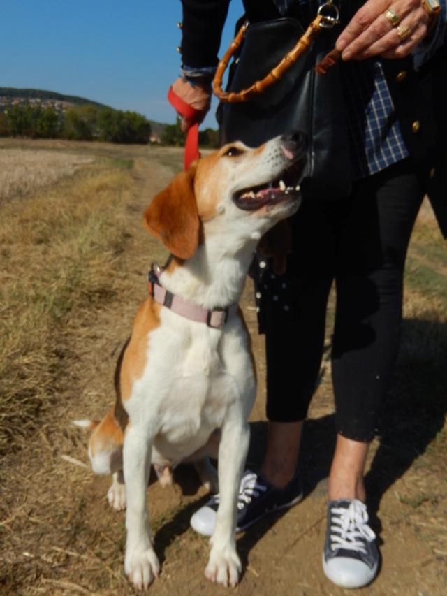 IODA (mâle croisé beagle) 5dscn713