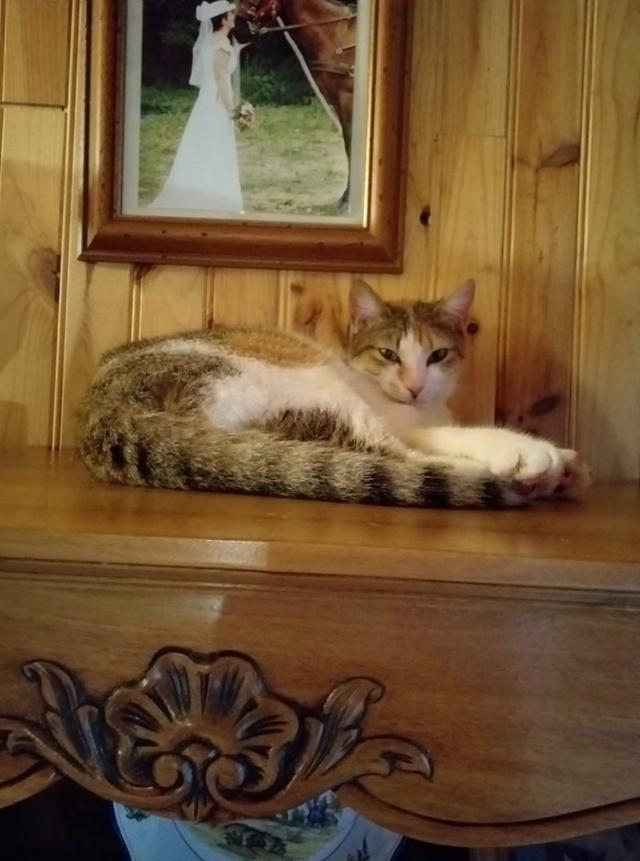 Sally (chaton tricolore) 60320712