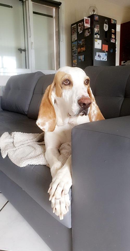 Haribo ( chien mâle croisé courant) 66469910