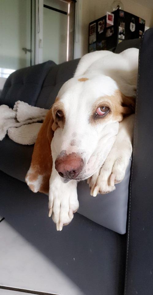 Haribo ( chien mâle croisé courant) 66584310