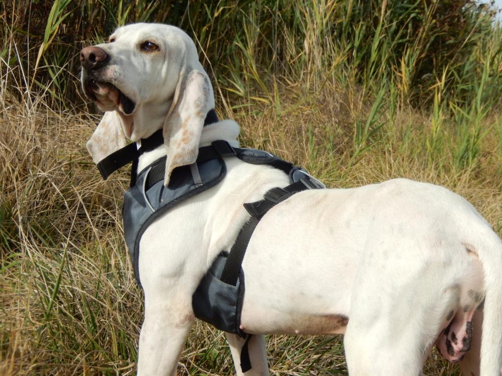 DOUDOU (chien mâle croisé courant) Réservé  6_dscn10