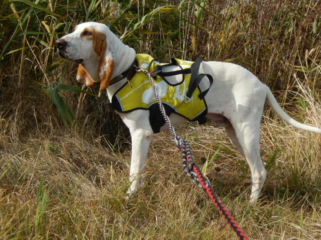 Haribo ( chien mâle croisé courant) 6_dscn11
