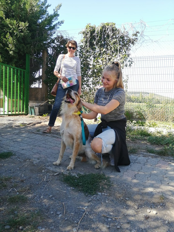 PANTOUFLE (chien croisé berger) 70172611