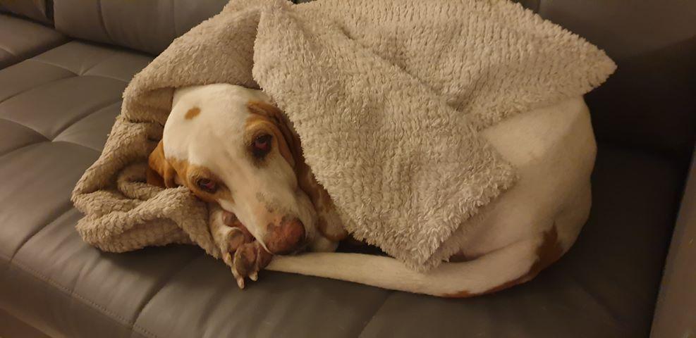 Haribo ( chien mâle croisé courant) 70837010