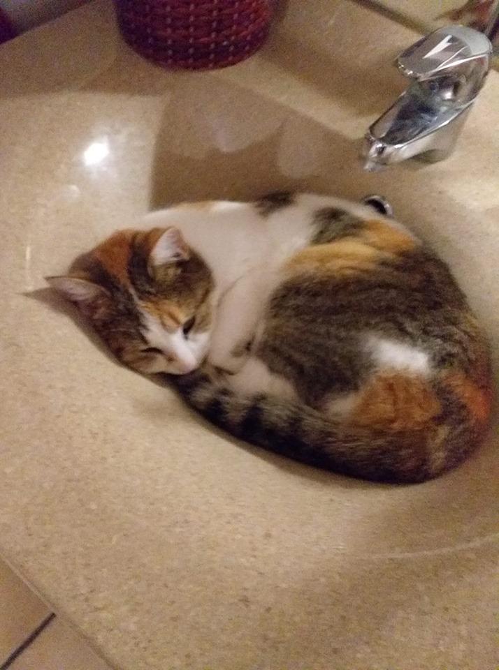 Sally (chaton tricolore) 74345710