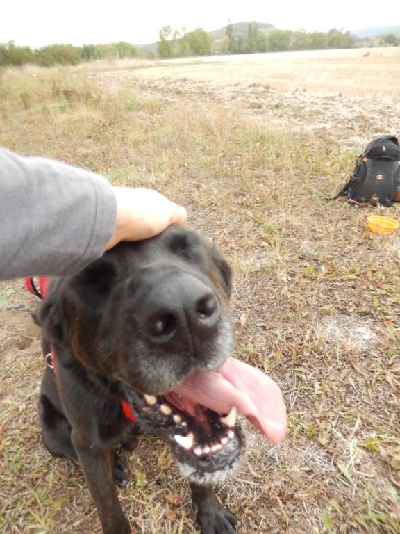 LOUXOR (chien mâle croisé dogue labrador) 7dscn712