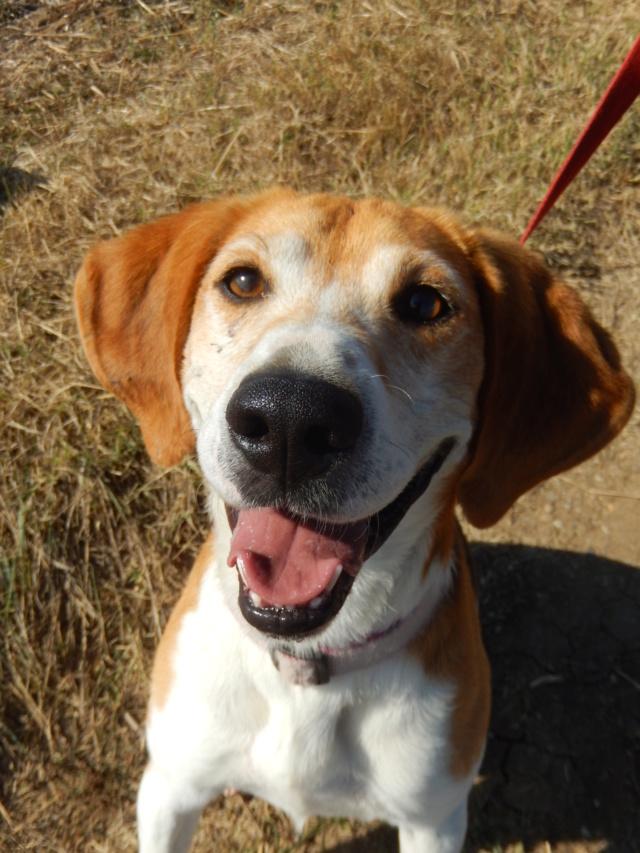 IODA (mâle croisé beagle) 7dscn715