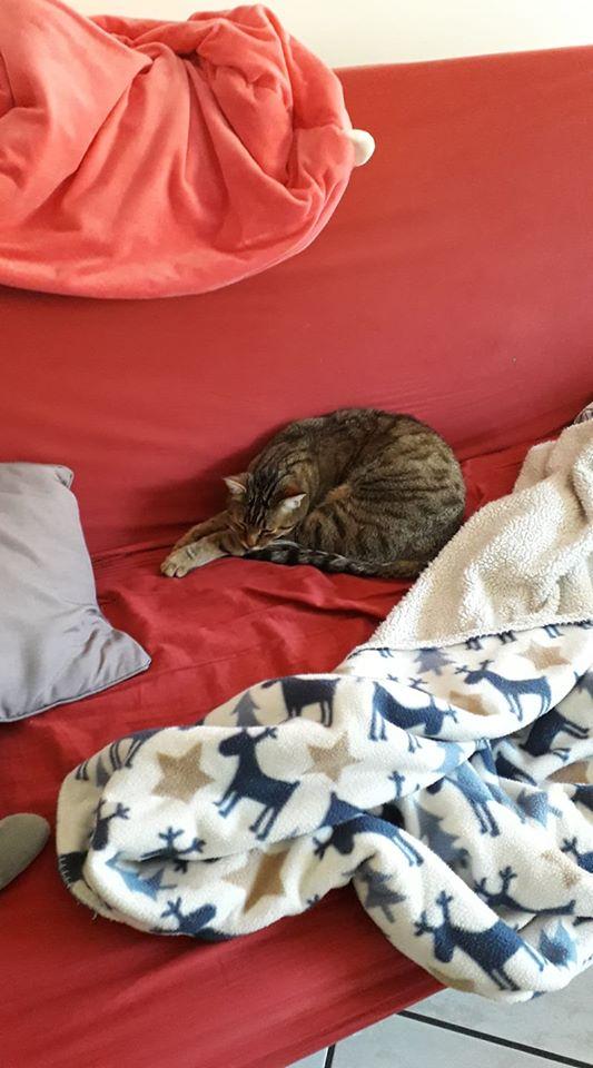 MELBOURNE (chaton tigré marron) - Page 2 82155110