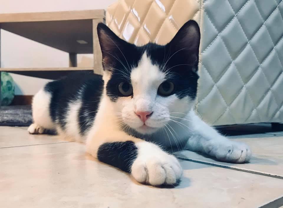 yucca (chaton noir et blanc) 89777110