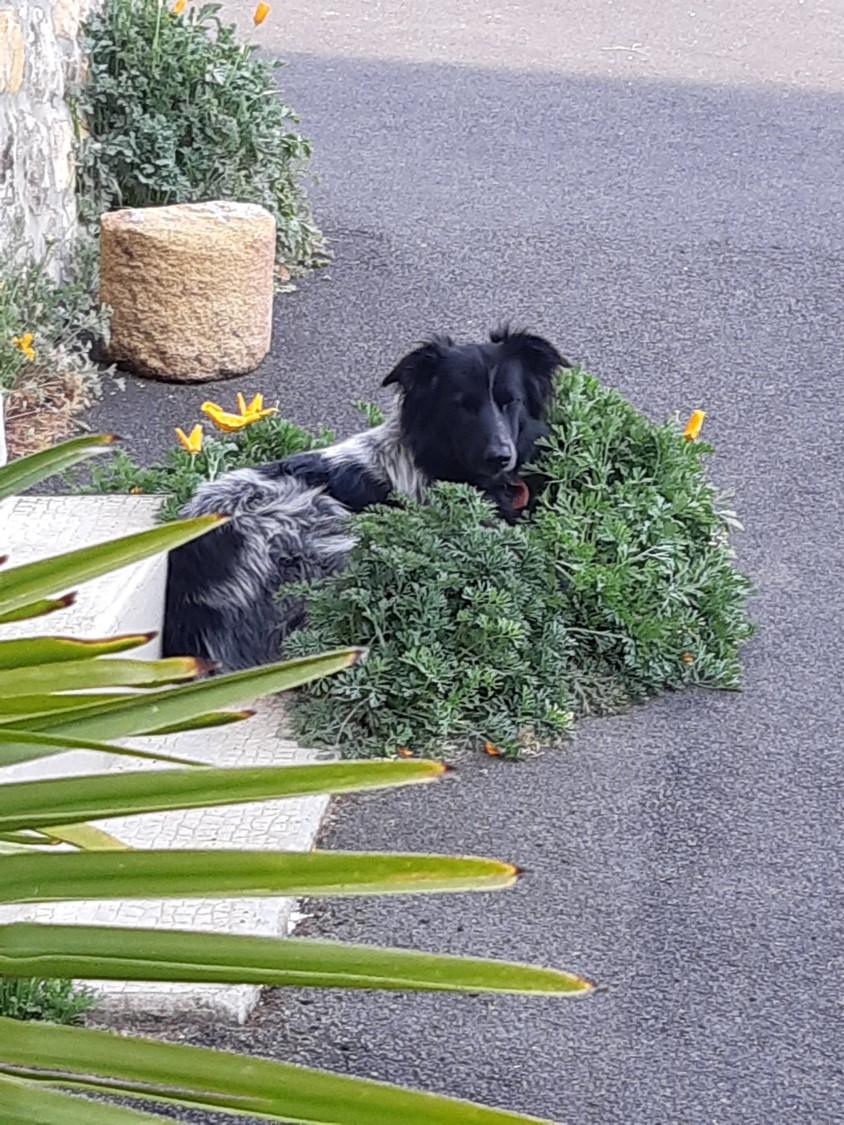 DOLAN (male croisé berger) 89ac3510