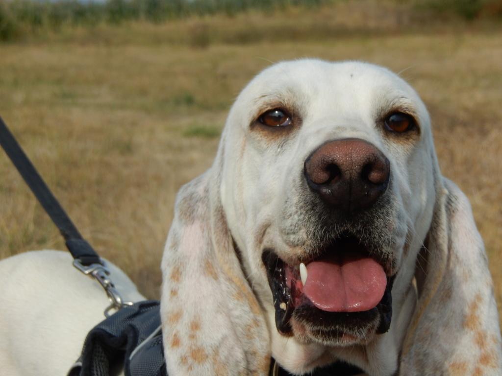 DOUDOU (chien mâle croisé courant) Réservé  9dscn711