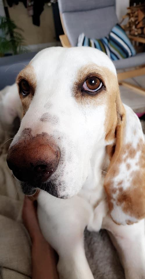 Haribo ( chien mâle croisé courant) B6043910