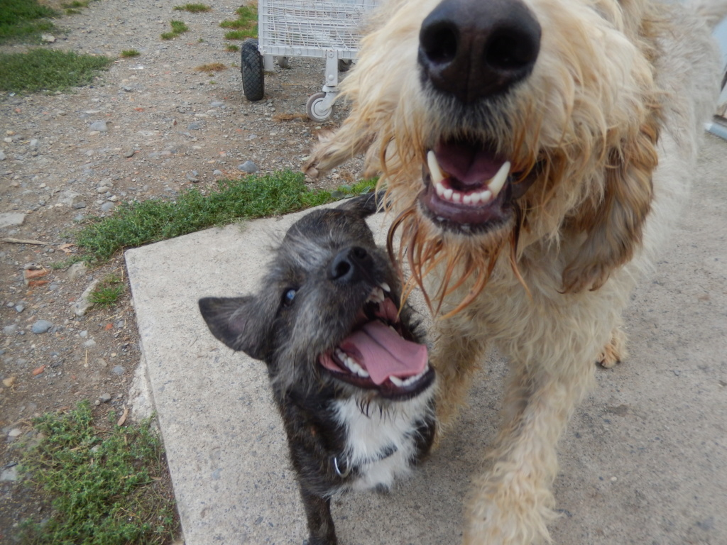 OSLO (chien mâle croisé berger) Dscn7212