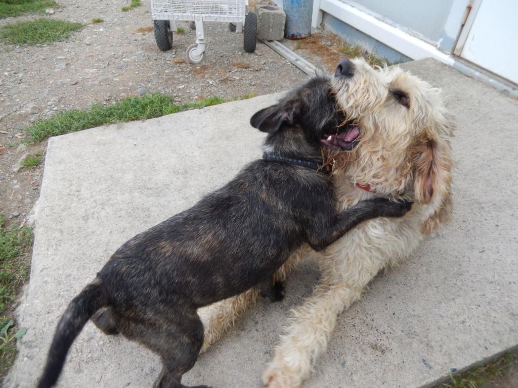 OSLO (chien mâle croisé berger) Dscn7214