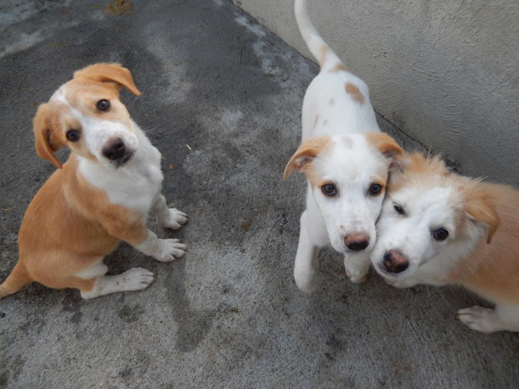 chiots femelles x 3 du genre choupinettes! Dscn9610