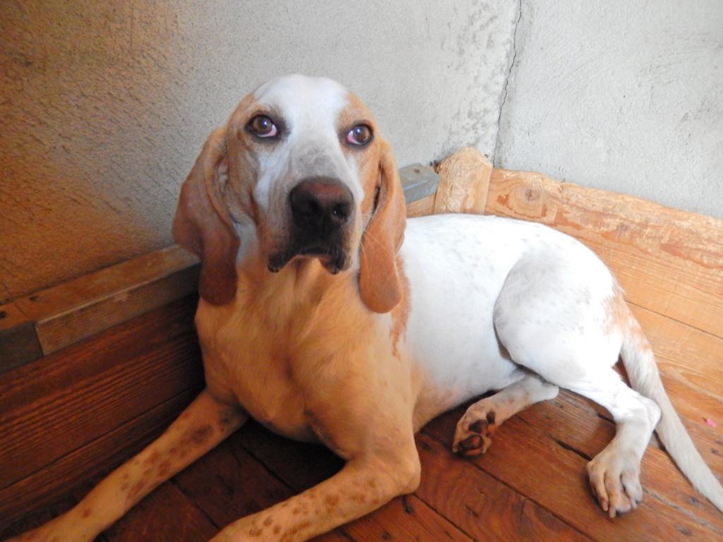 ABU (chien mâle croisé courant) Réservé  Fscn6010