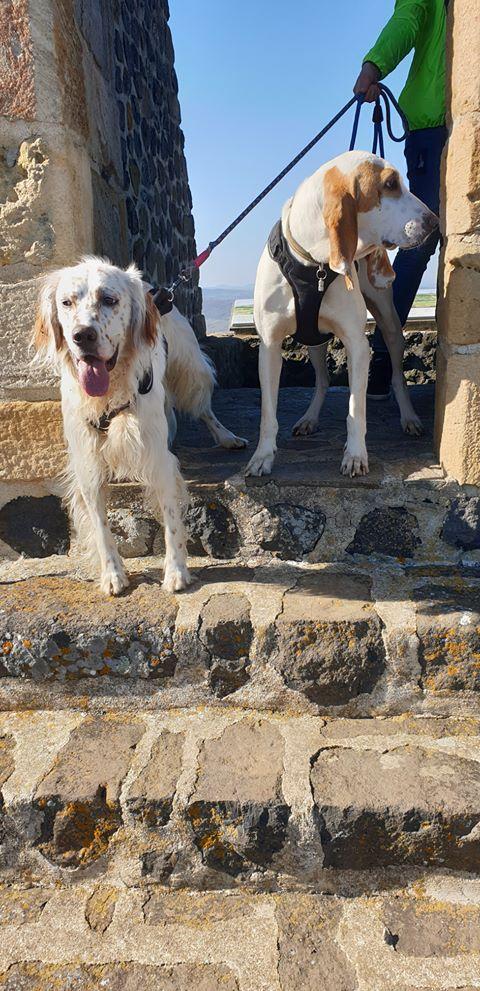 Haribo ( chien mâle croisé courant) Gggggg10