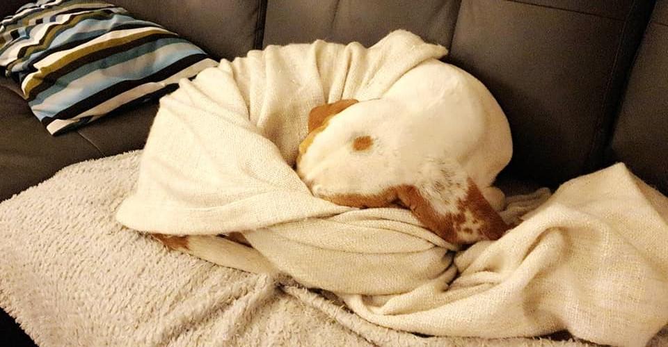 Haribo ( chien mâle croisé courant) H6033710
