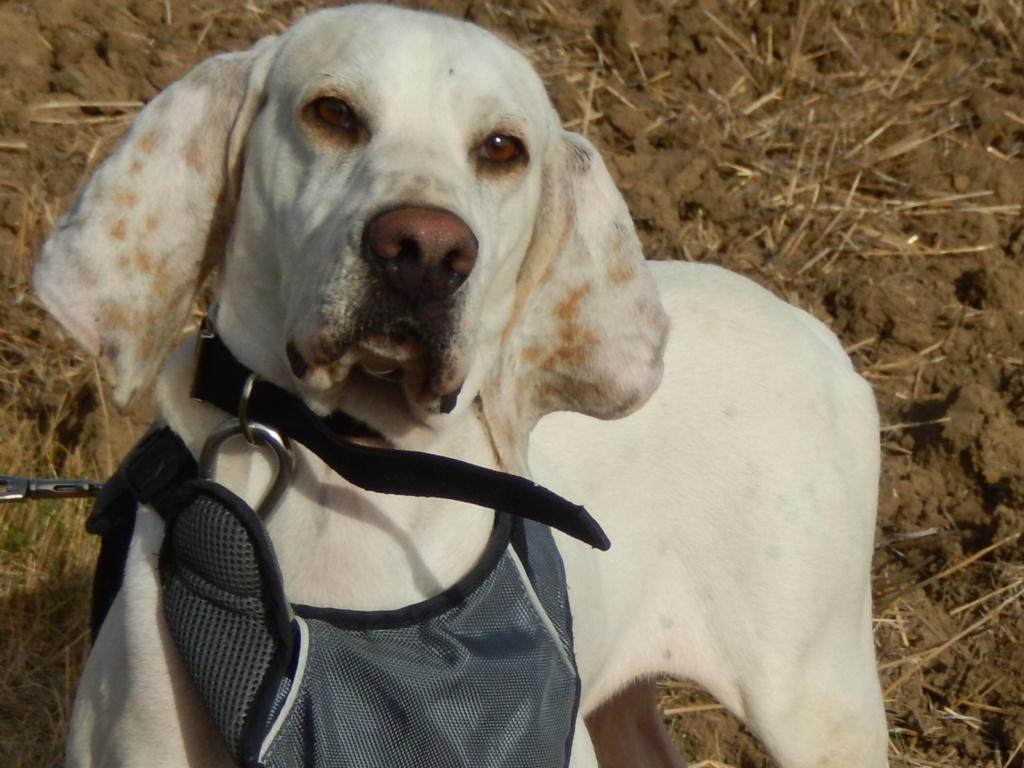 DOUDOU (chien mâle croisé courant) Réservé  Rscn8110