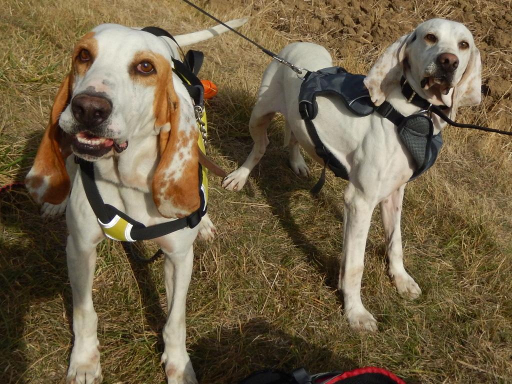 DOUDOU (chien mâle croisé courant) Réservé  Rscn8112