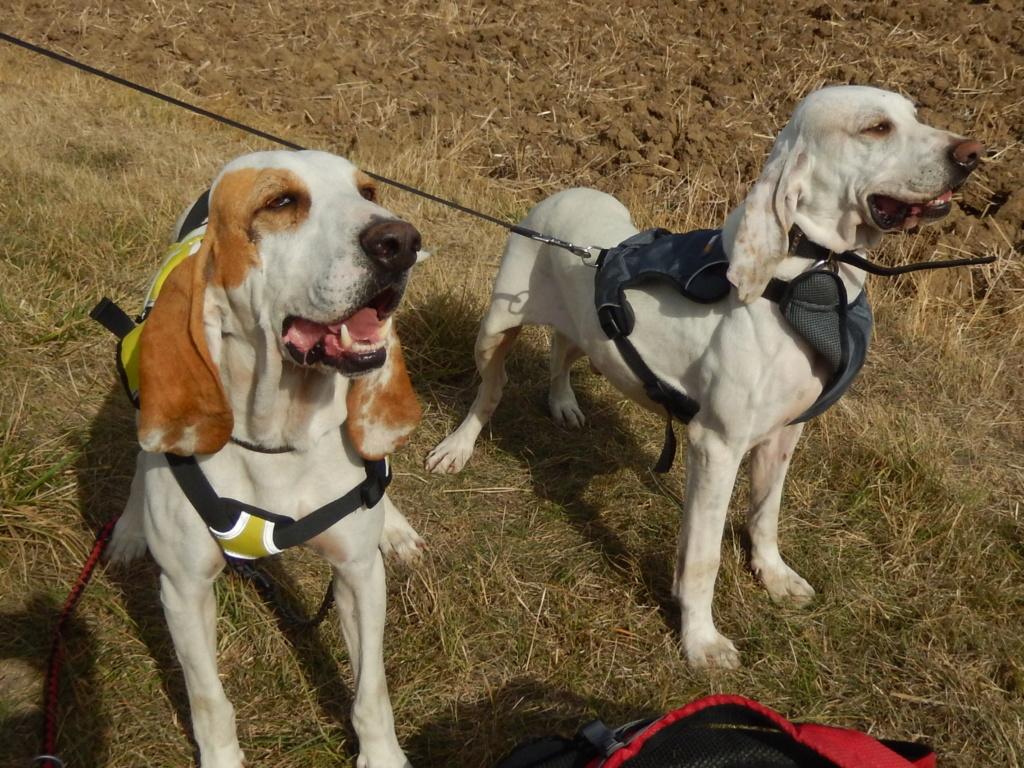 DOUDOU (chien mâle croisé courant) Réservé  Rscn8113