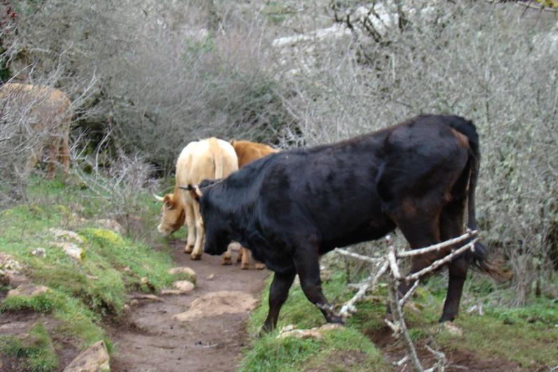 FOTOS: KEDADA EXCURSIÓN AL TORCAL DE ANTEQUERA (Foro Psico-Social Málaga) SÁBADO 12 Enero de 2013 74079310