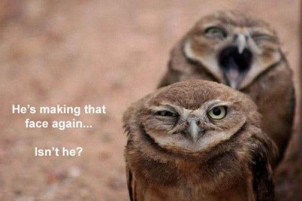 Humorous pictures Fun-1010